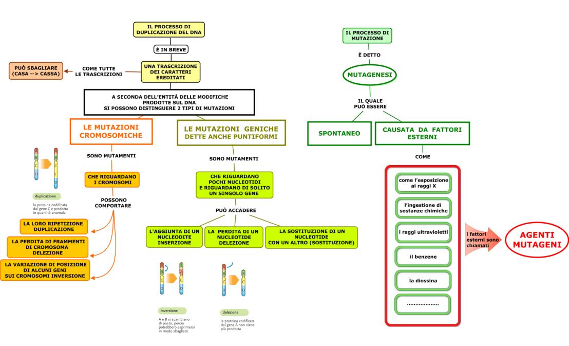01.-LE-MUTAZIONI-NEL-DNA (2)